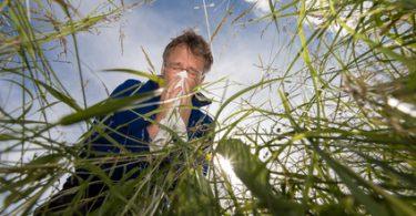 Mann auf Graswiese leidet unter Pollenallergie